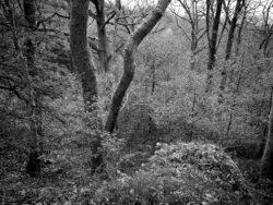 171118 Birk Dault Wood 140