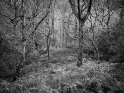 171118 Birk Dault Wood 176