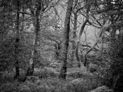 171118 Birk Dault Wood 179