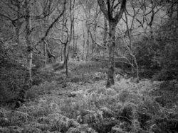 171118 Birk Dault Wood 183