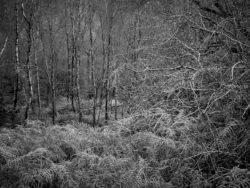171118 Birk Dault Wood 190