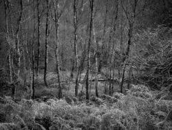 171118 Birk Dault Wood 213
