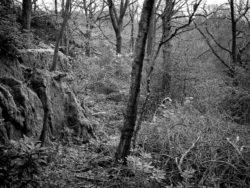 171118 Birk Dault Wood 298