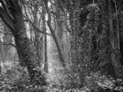 171212 Thetford Forest 011