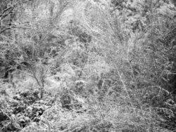 171212 Thetford Forest 047