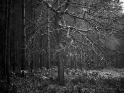 171212 Thetford Forest 058
