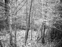 171212 Thetford Forest 069