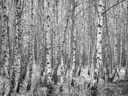 171212 Thetford Forest 092