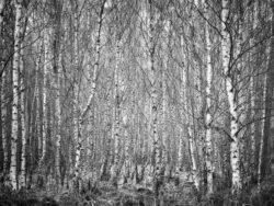 171212 Thetford Forest 107