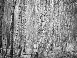 171212 Thetford Forest 132