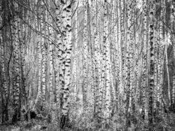 171212 Thetford Forest 137