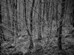171227 Grizedale 111