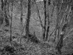 171231 Low Wood 015