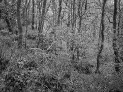 171231 Low Wood 022