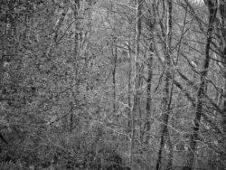 171231 Low Wood 025