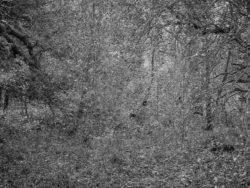171231 Low Wood 030