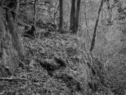 171231 Low Wood 061