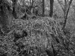 171231 Low Wood 064