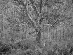 171231 Low Wood 094
