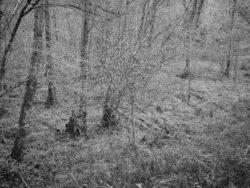 171231 Low Wood 097 1