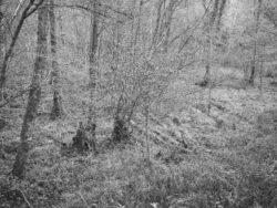 171231 Low Wood 097