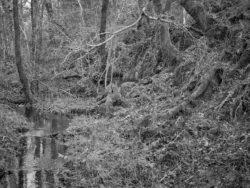 171231 Low Wood 107