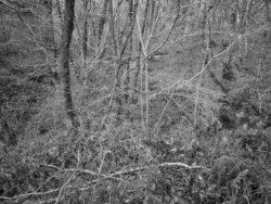 171231 Low Wood 125