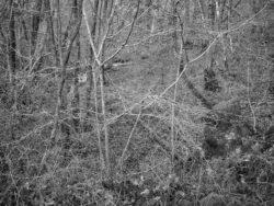171231 Low Wood 126