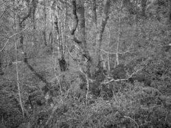 171231 Low Wood 142