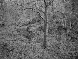 171231 Low Wood 145