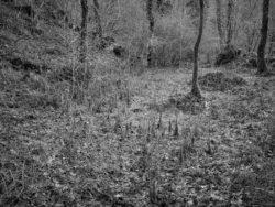 171231 Low Wood 152