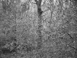 171231 Low Wood 170