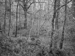171231 Low Wood 172