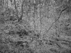 171231 Low Wood 176
