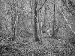 171231 Low Wood 192