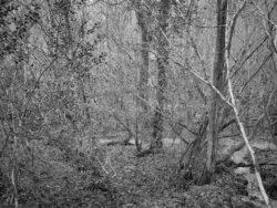 171231 Low Wood 196