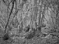 171231 Low Wood 231
