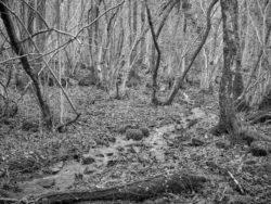171231 Low Wood 243