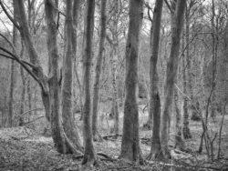 180101 Roudsea Wood 003