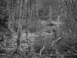 180101 Roudsea Wood 017