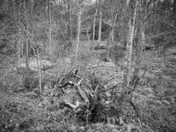 180101 Roudsea Wood 045 1