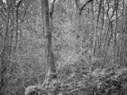 180101 Roudsea Wood 098