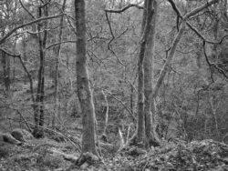 180101 Roudsea Wood 123