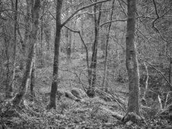 180101 Roudsea Wood 126