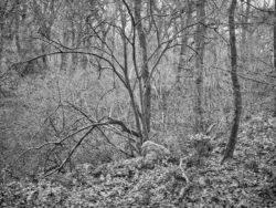 180101 Roudsea Wood 129