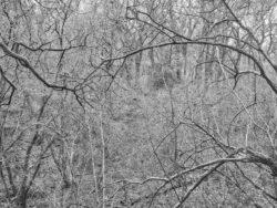 180101 Roudsea Wood 133