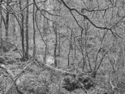 180101 Roudsea Wood 136