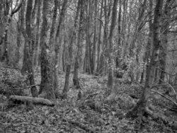 180101 Roudsea Wood 138