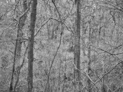 180101 Roudsea Wood 148