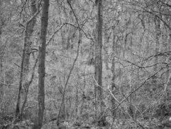 180101 Roudsea Wood 151
